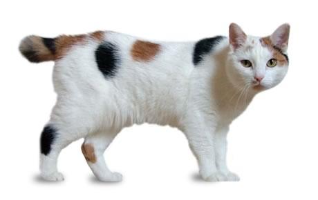 manx-cat6