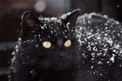 adorable-animal-cat-302280